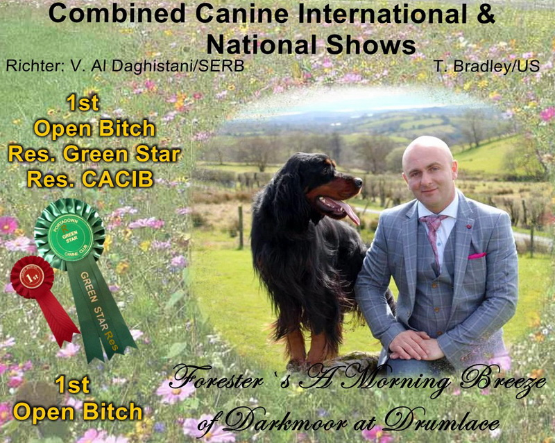 foresters-gordon-setter-zucht-of-darkmoor-irland
