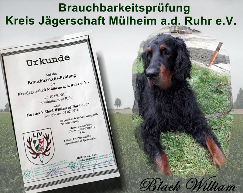 gordon-setter-zucht-foresters-of-darkmoor-brauchbarkeit