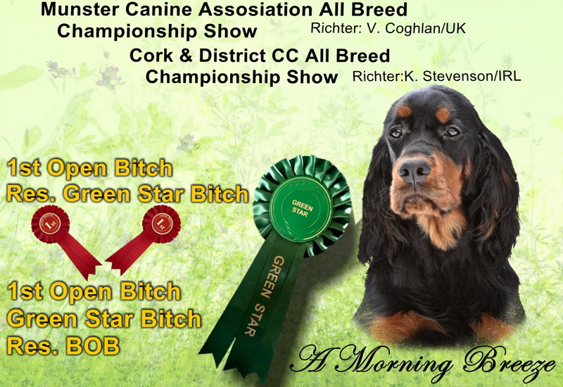 gordon-setter-zucht-foresters-of-darkmoor-irland