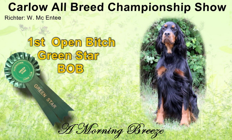 gordon-setter-zucht-foresters-of-darkmoor-carlow
