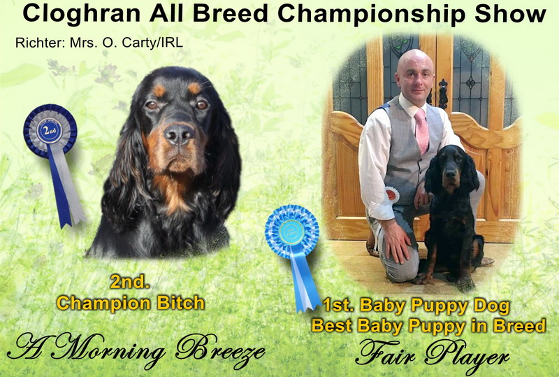 gordon-setter-zucht-foresters-of-darkmoor-show