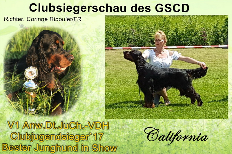gordon-setter-zucht-foresters-of-darkmoor-clubsieger