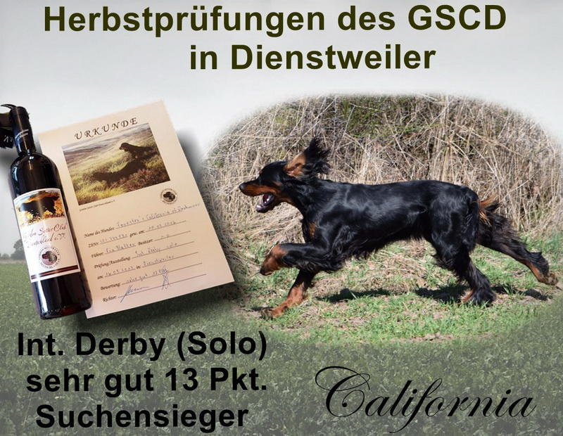 gordon-setter-zucht-forestres-of-darkmoor-dienstweiler