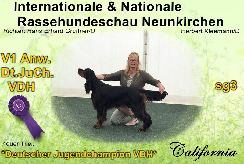 gordon-setter-zucht-foresters-of-darkmoor-neunkirchen