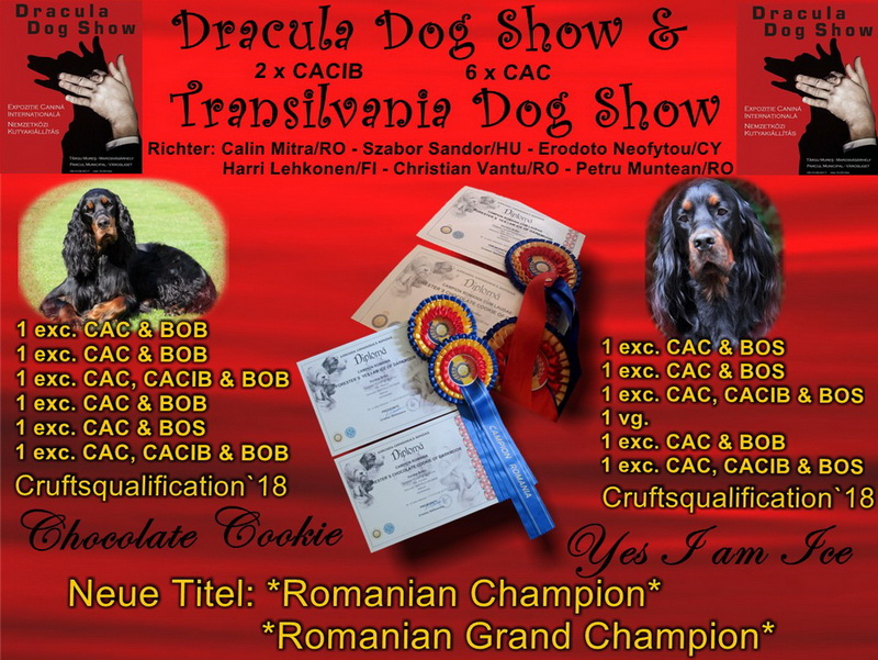 gordon-setter-zucht-foresters-of-darkmoor-dracula-show