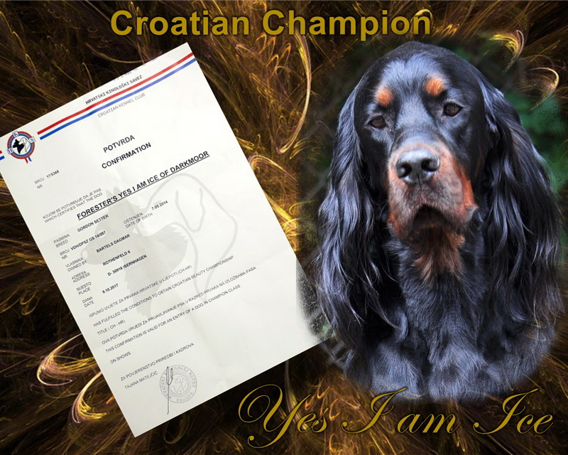 gordon-setter-zucht-foresters-of-darkmoor-croatian-champion