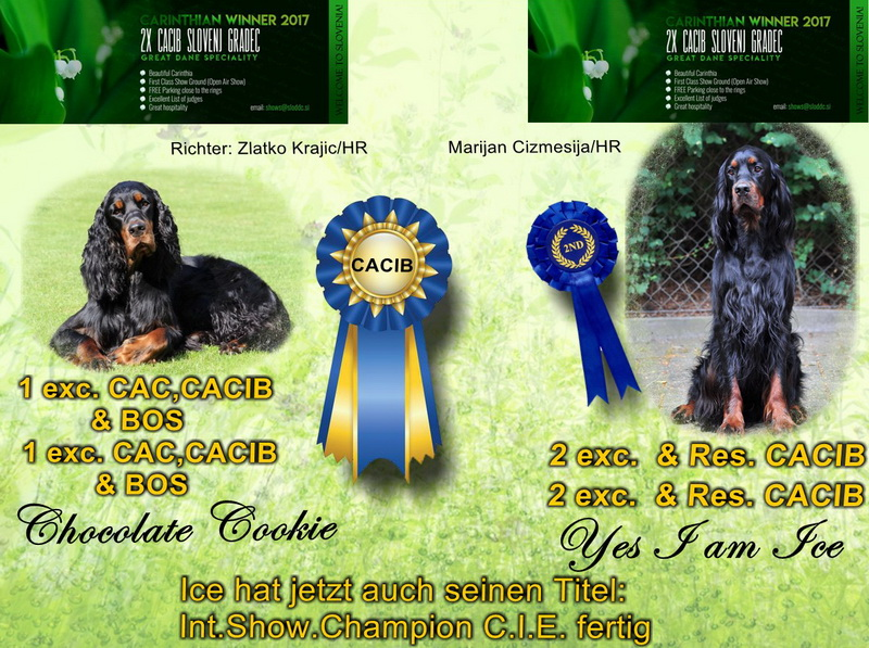 gordon-setter-zucht-foresters-of-darkmoor-slovenien