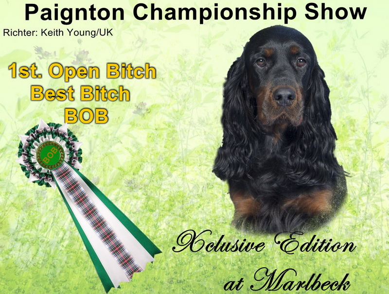 gordon-setter-zucht-foresters-of-darkmoor-uk
