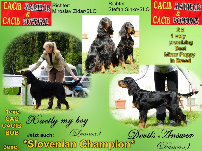 gordon-setter-zucht-foresters-of-darkmoor