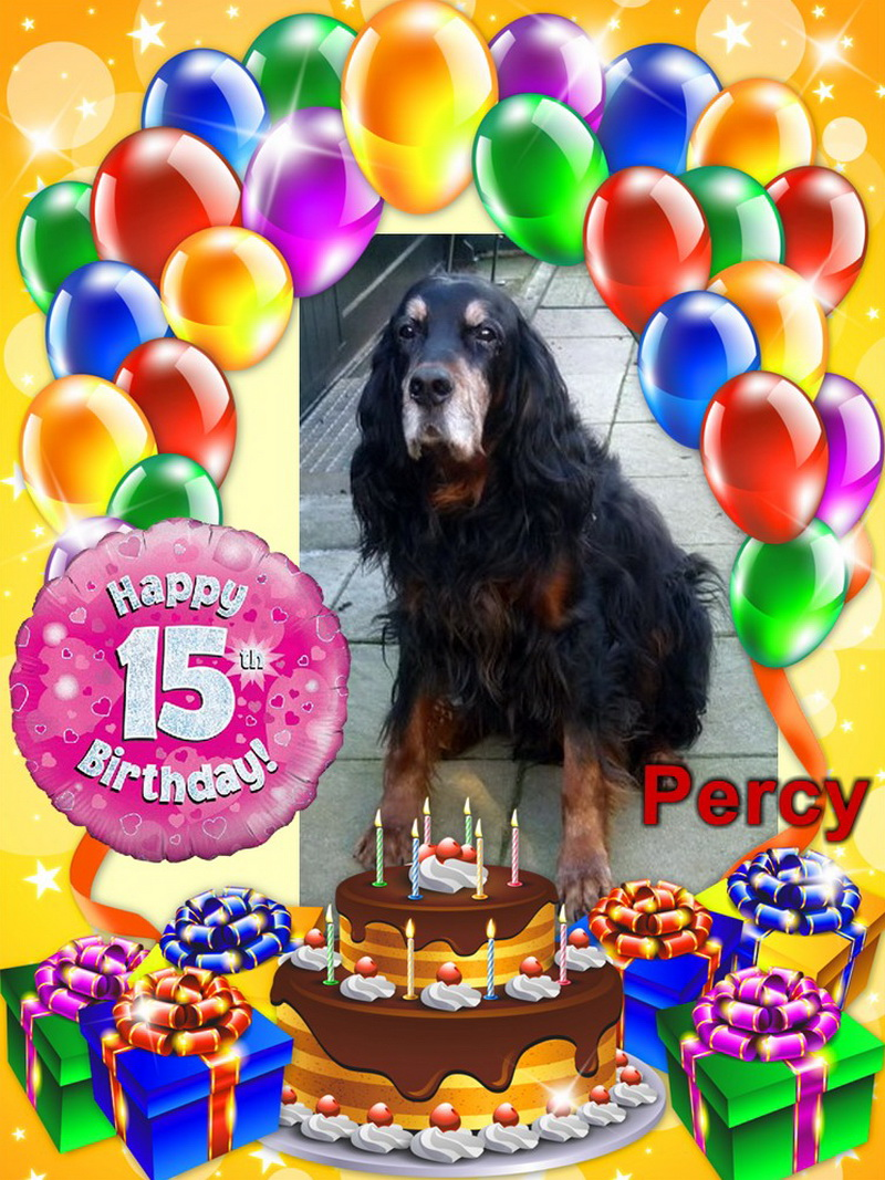 gordon-setter-zucht-foresters-of-darkmoor-birthday