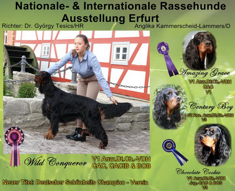 foresters-gordon-setter-zucht-of-darkmoor-erfurt