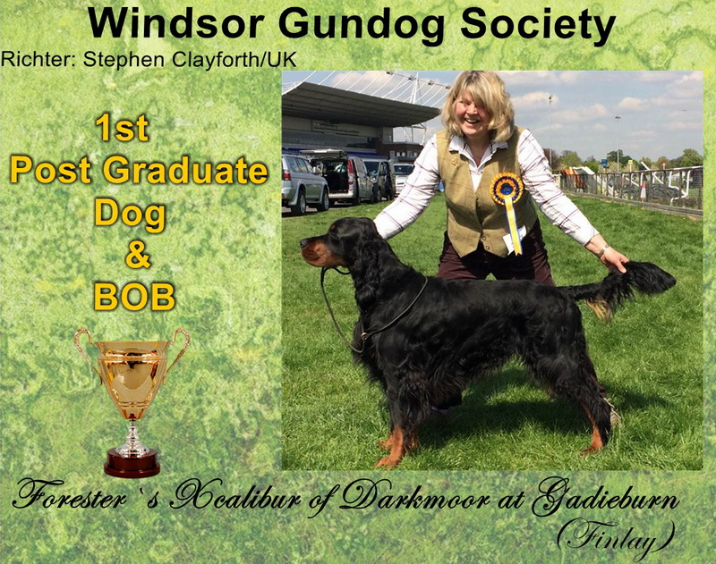 foresters-gordon-setter-zucht-of-darkmoor-windsor