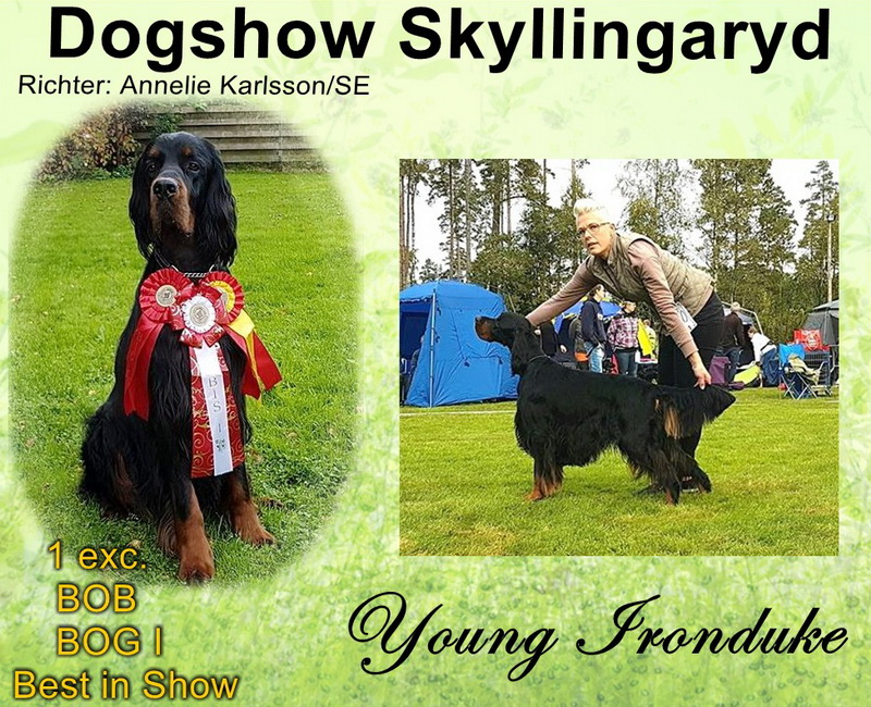 gordon-setter-zucht-foresters-of-darkmoor-skyllingaryd