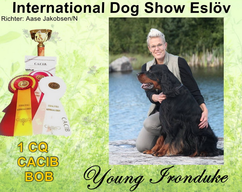 gordon-setter-zucht-foresters-of-darkmoor-esloev