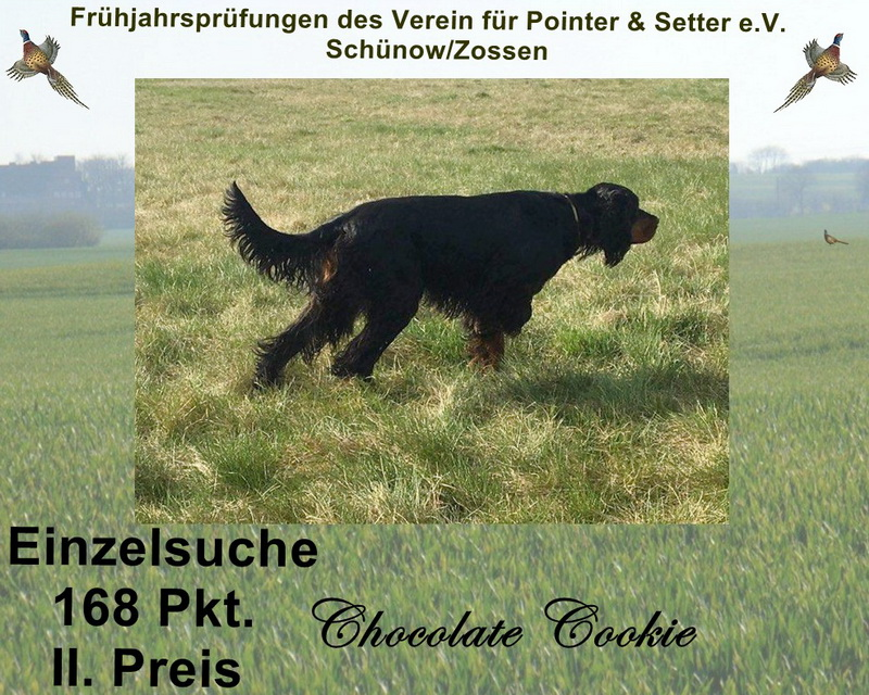 gordon-setter-zucht-foresters-of-darkmoor-einzelsuche
