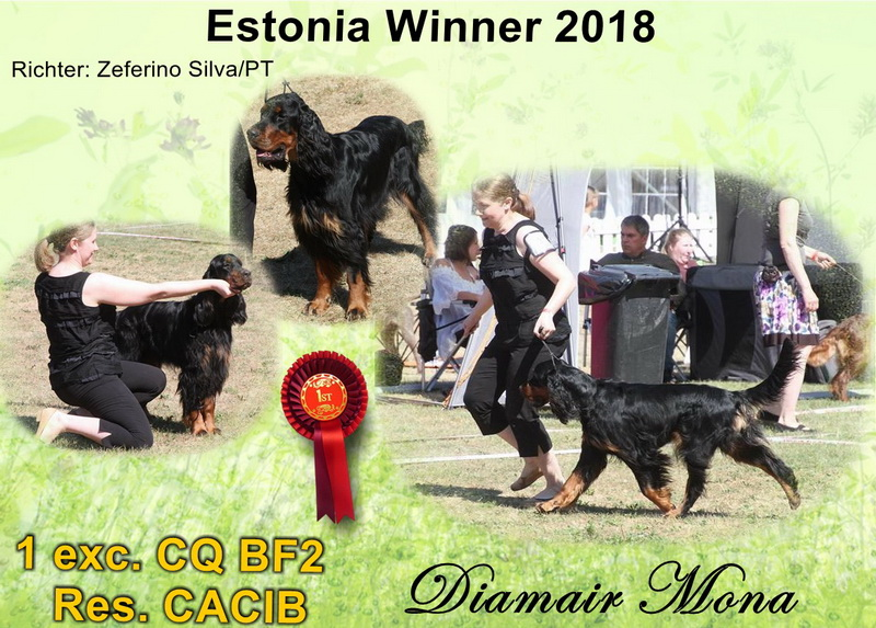 gordon-setter-zucht-foresters-of-darkmoor-estonia