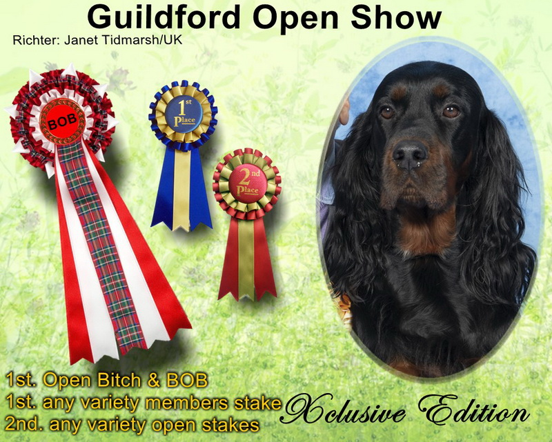 gordon-setter-zucht-foresters-of-darkmoor-guildford