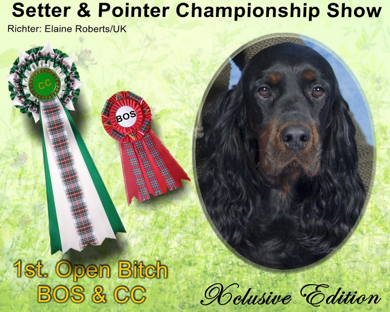 foresters-of-darkmoor-gordon-setter-zucht-cc