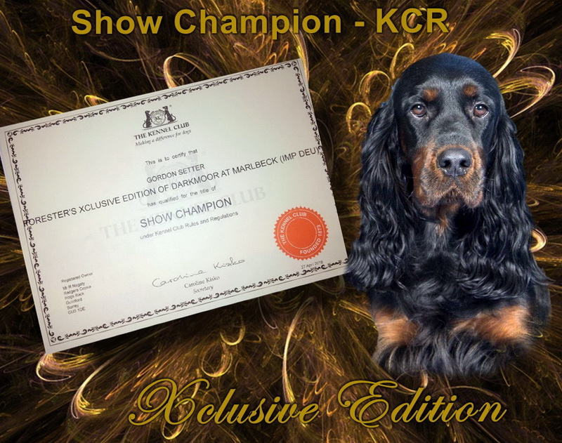 gordon-setter-zucht-foresters-of-darkmoor-show-champion