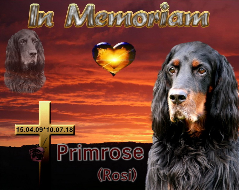 foresters-of-darkmoor-gordon-setter-zucht-memoriam