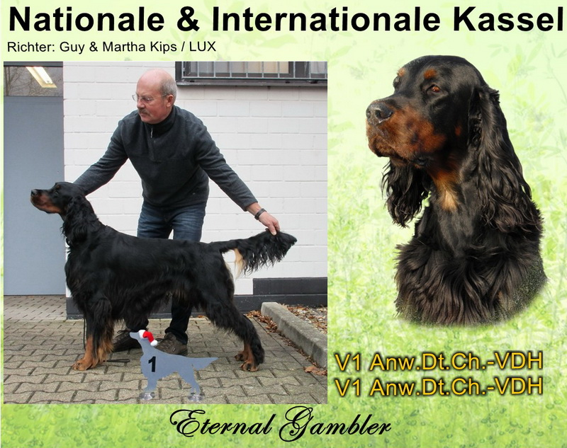 gordon-setter-zucht-foresters-of-darkmoor-kassel