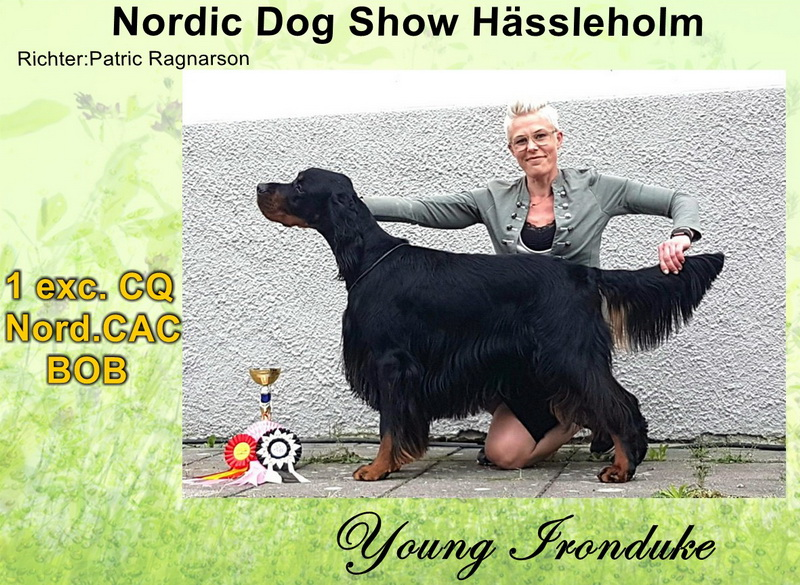 gordon-setter-zucht-foresters-of-darkmoor-haessleholm