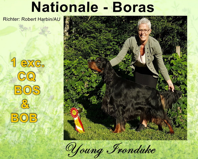 gordon-setter-zucht-foresters-of-darmoor-boras