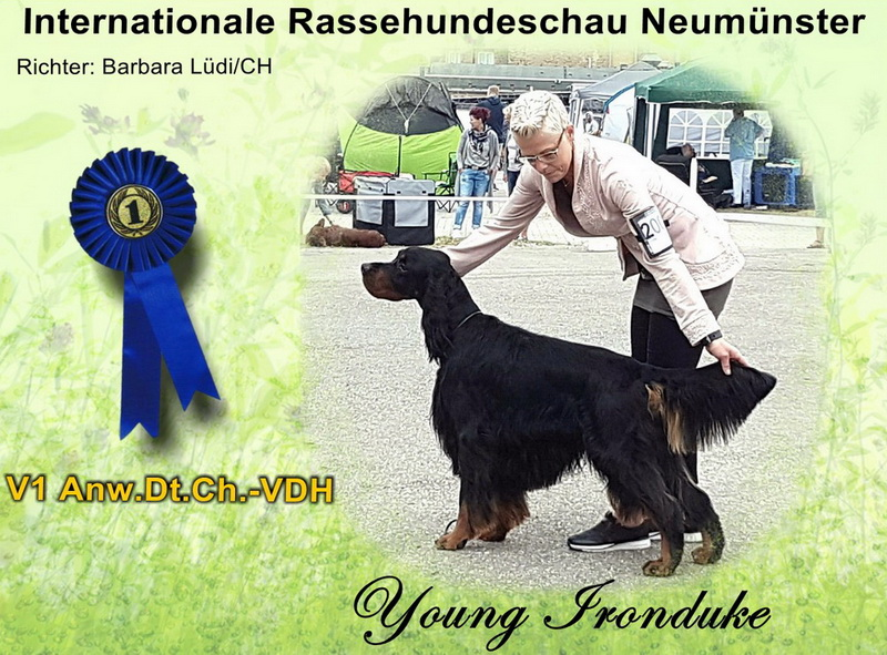 gordon-setter-zucht-foresters-of-darkmoor-neumuenster