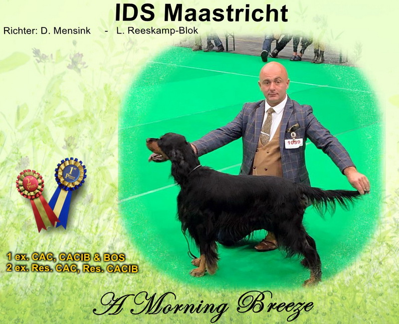 gordon-setter-zucht-foresters-of-darkmoor-maastricht