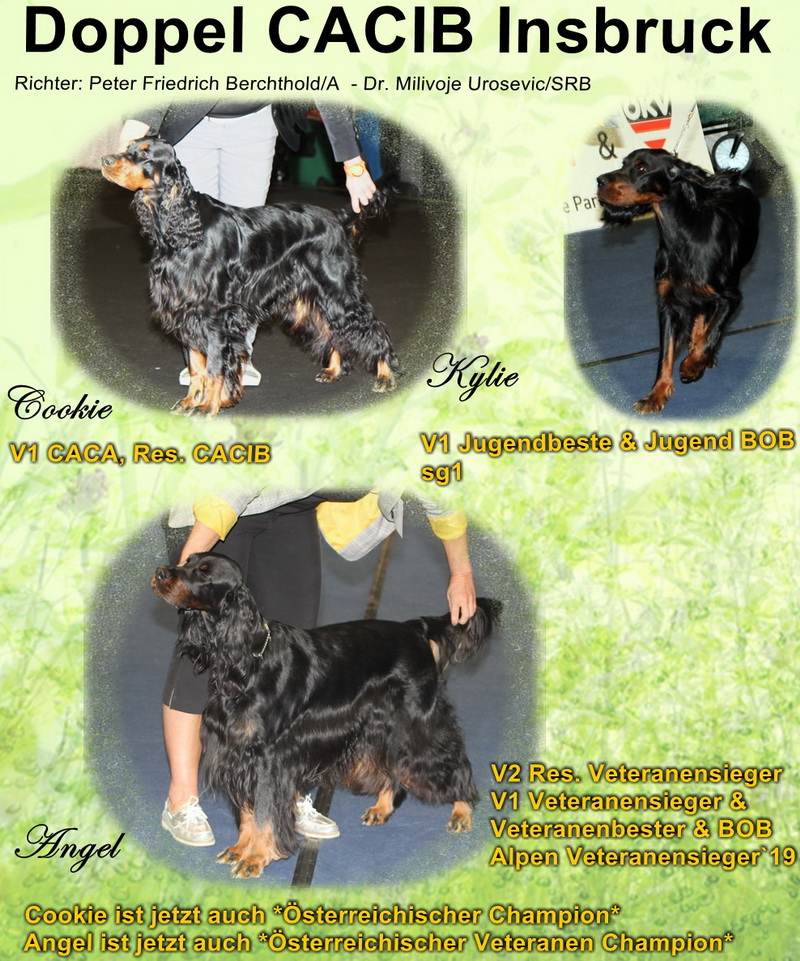 foresters-of-darkmoor-gordon-setter-zucht-insbruck