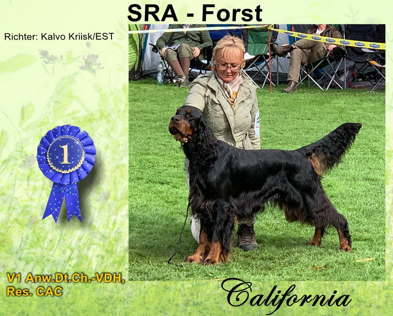 foresters-of-darkmoor-gordon-setter-zucht-forest