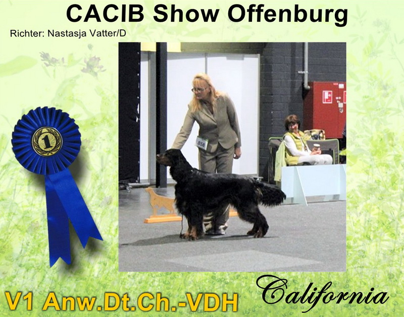 gordon-setter-zucht-foresters-of-darkmoor-offenburg