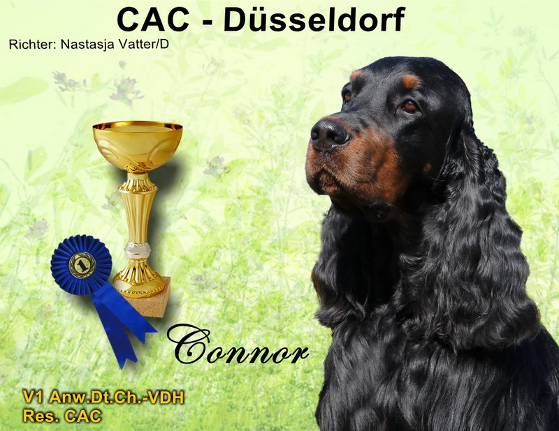 foresters-of-darkmoor-gordon-setter-zucht-duesseldorf