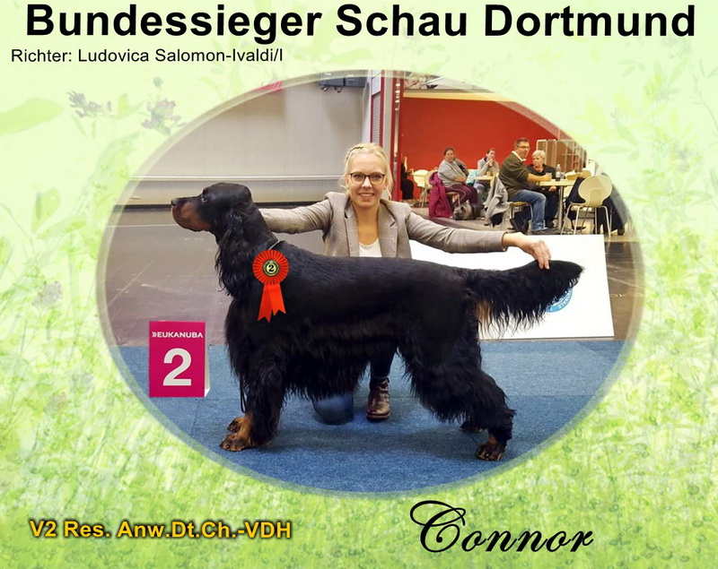 gordon-setter-zucht-foresters-of-darkmoor-dortmund