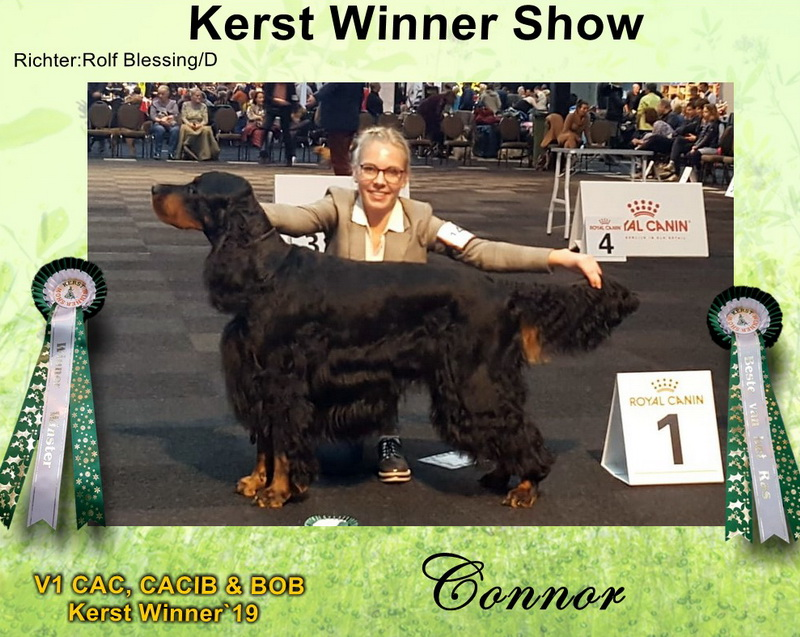 gordon-setter-zucht-foresters-of-darkmoor-kerst-winner