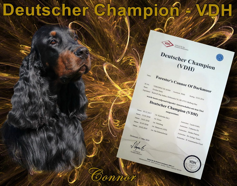 foresters-of-darkmoor-gordon-setter-champion
