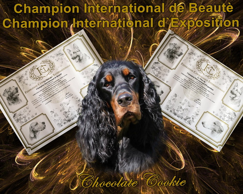 gordon-setter-zucht-foresters-of-darkmoor-champion