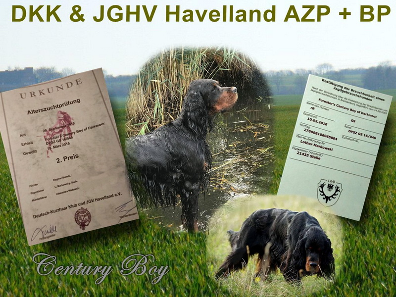 foresters-of-darkmoor-gordon-setter-zucht-azp