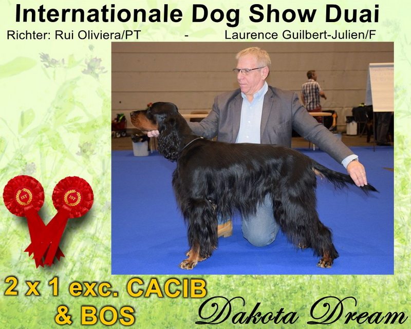 gordon-setter-zucht-foresters-of-darkmoor-douai