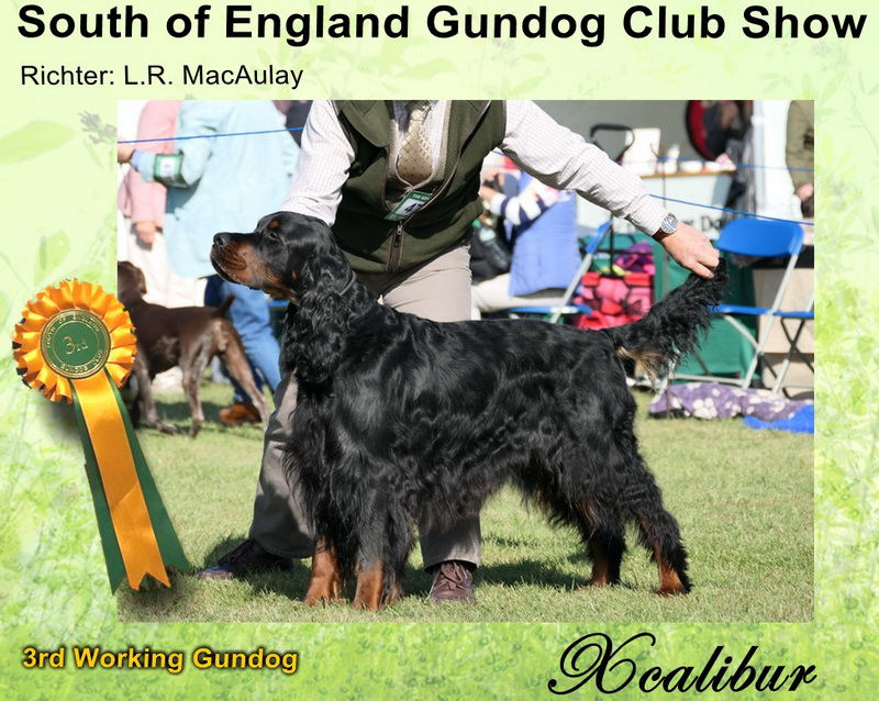 gordon-setter-zucht-foresters-of-darkmoor-finlay