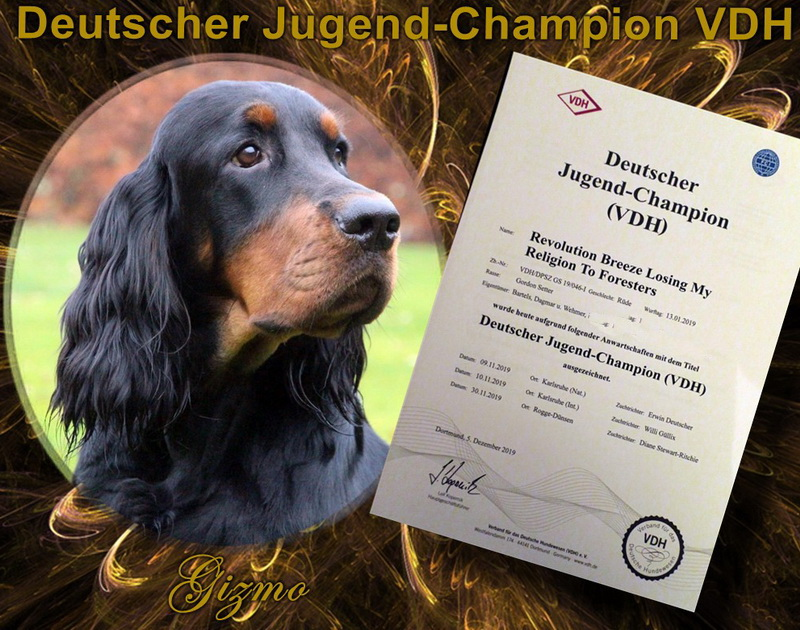 gordon-setter-zucht-foresters-of-darkmoor-vdh