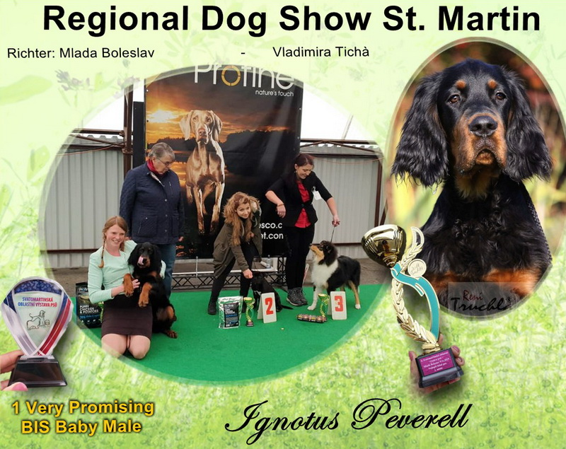 foresters-of-darkmoor-gordon-setter-zucht-st-martin