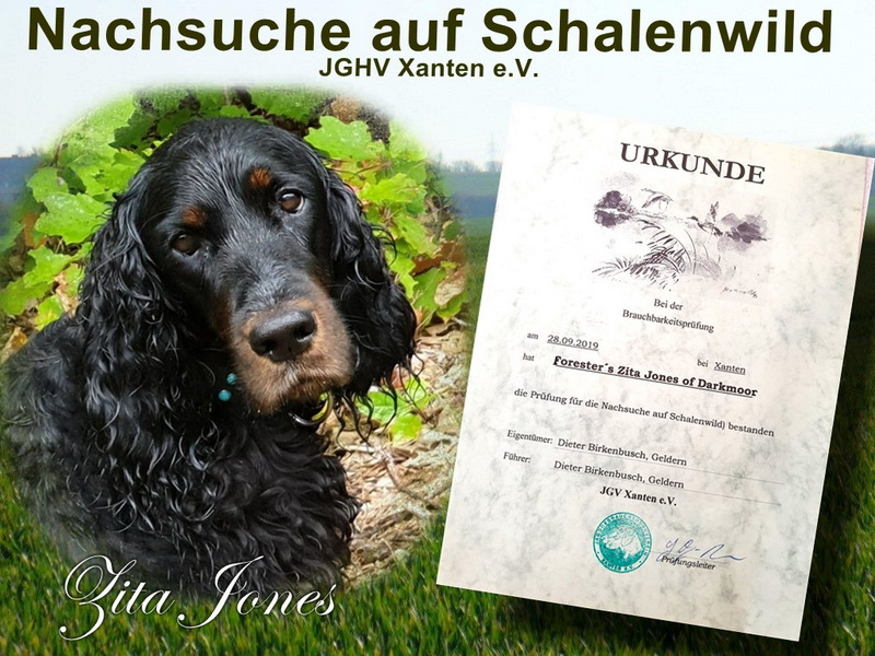 gordon-setter-zucht-foresters-of-darkmoor-nachsuche