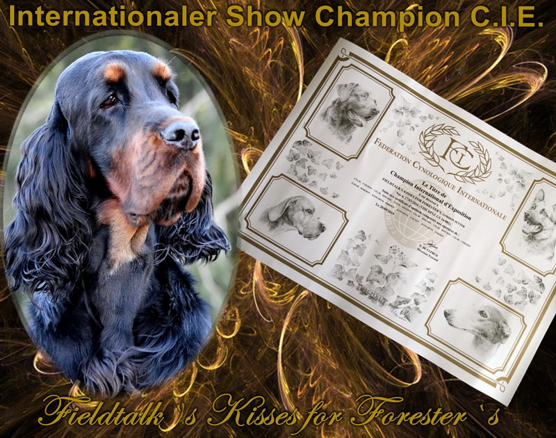 foresters-of-darkmoor-gordon-setter-zucht-champion