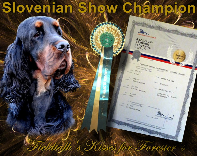 foresters-of-darkmoor-gordon-setter-zucht-slovenia