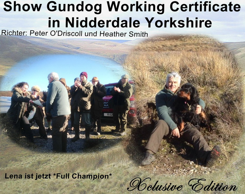 gordon-setter-zucht-foresters-of-darkmoor-working