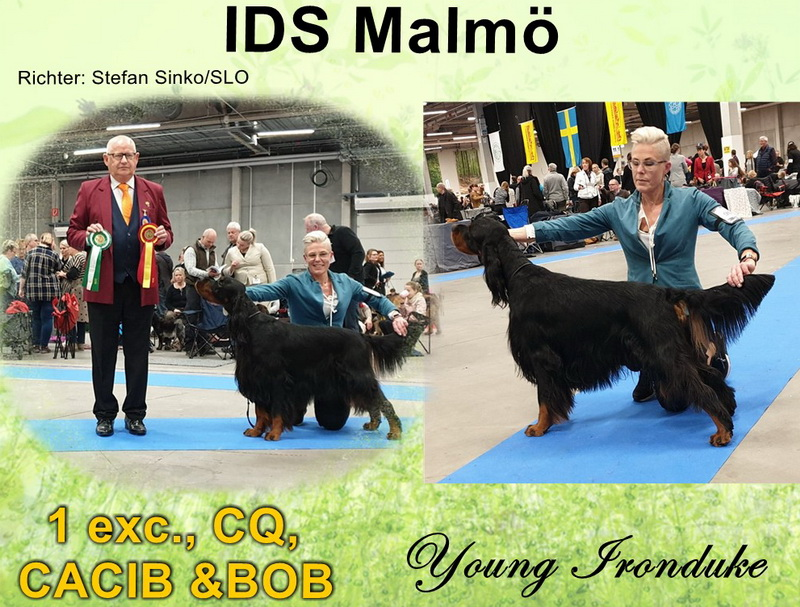 gordon-setter-zucht-foresters-of-darkmoor-malmoe