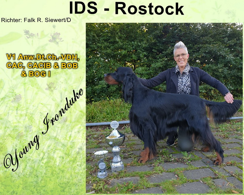 foresters-of-darkmoor-gordon-setter-zucht-rostock