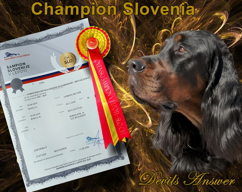 gordon-setter-zucht-foresters-of-darkmoor-slovenian-champion
