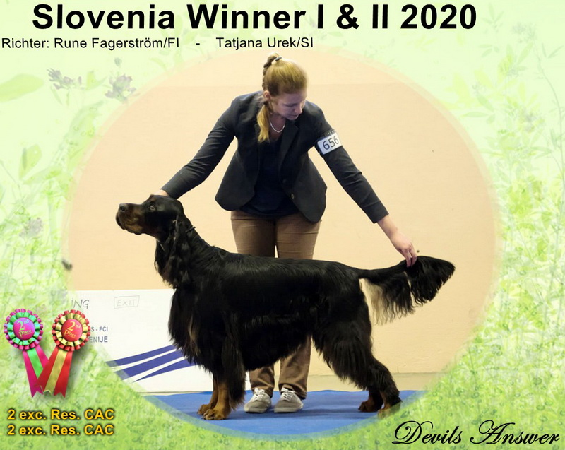 gordon-setter-zucht-foresters-of-darkmoor-slovenia